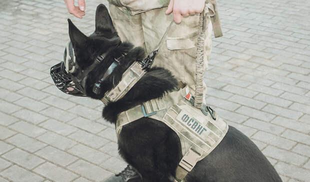 Служебные собаки помогли раскрыть убийство вВолжском