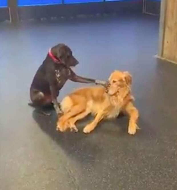 Пес из Онтарио гладит всех собак, которых встречает