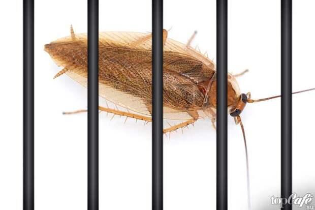 Как избавиться от тараканов: ловушки, гели, мелки