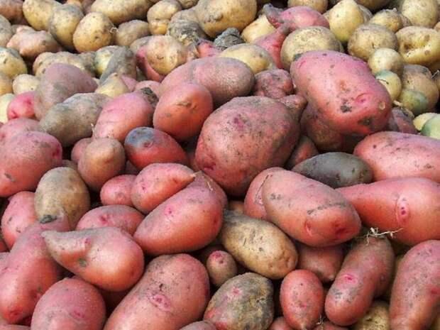 Разный цвет из-за содержащихся пигментов. /Фото: depositphotos.com.