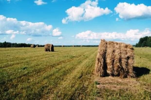 Эфир: Что мешает производить и продавать фермерскую продукцию в России