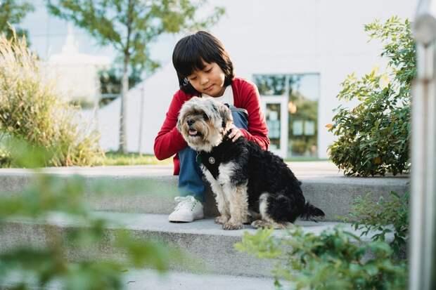 Психолог рассказала, до какого возраста детям нельзя заводить животных