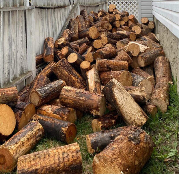 Фотография дров вызвала споры в соцсетях: автор утверждает, что на ней есть собака