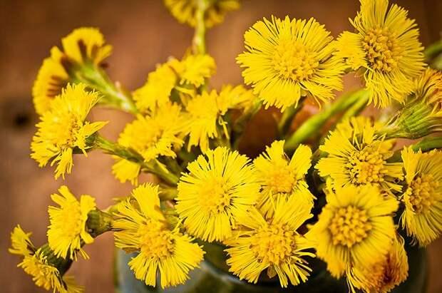 Целебные листья. Какие лекарственные растения растут у нас под ногами?