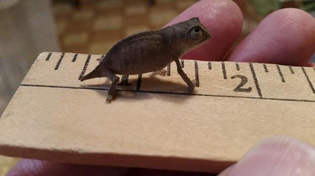 cute-baby-chameleons-58349e5632bd1__700