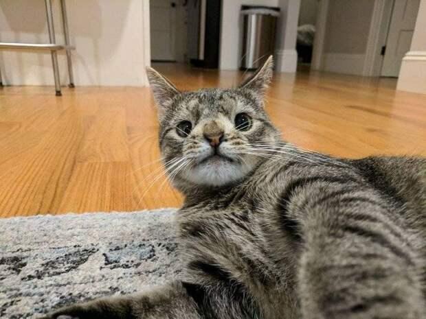 Коты с необычной внешностью
