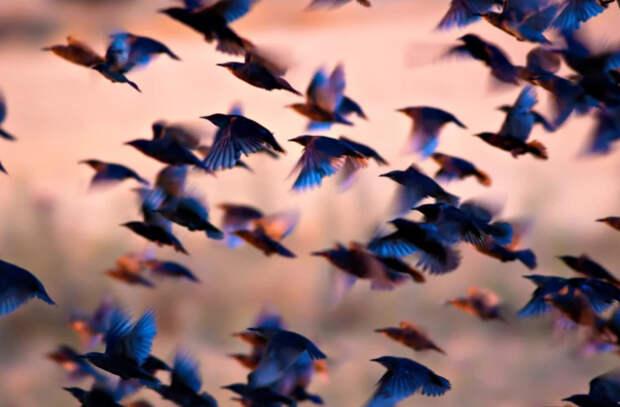 Численность птиц на Земле превысила общее число всех людей