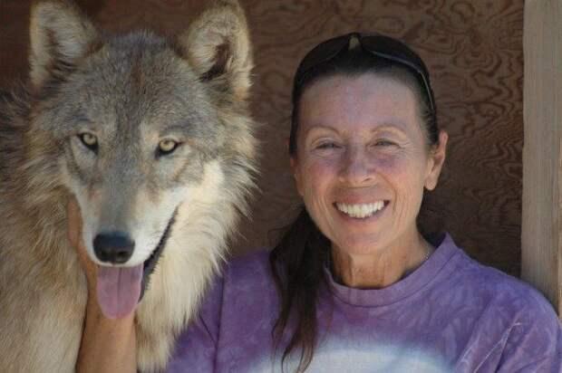 Женщина спасла трёх щенков волка. Теперь они превратились во взрослых гордых животных