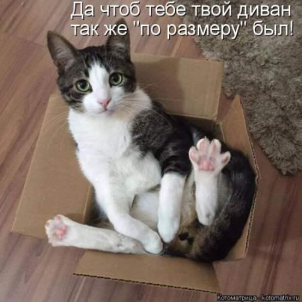 Усато-полосатые котоматрицы