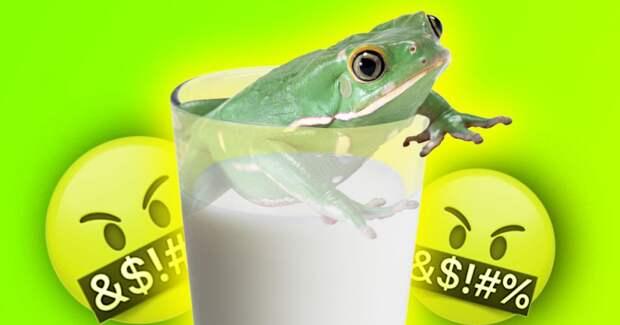 3 причины, почему притча о двух лягушках в молоке – полный бред