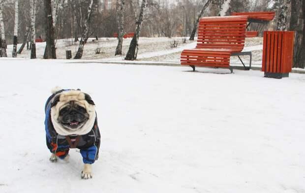 Синоптики прогнозируют холодный ноябрь в Иркутской области