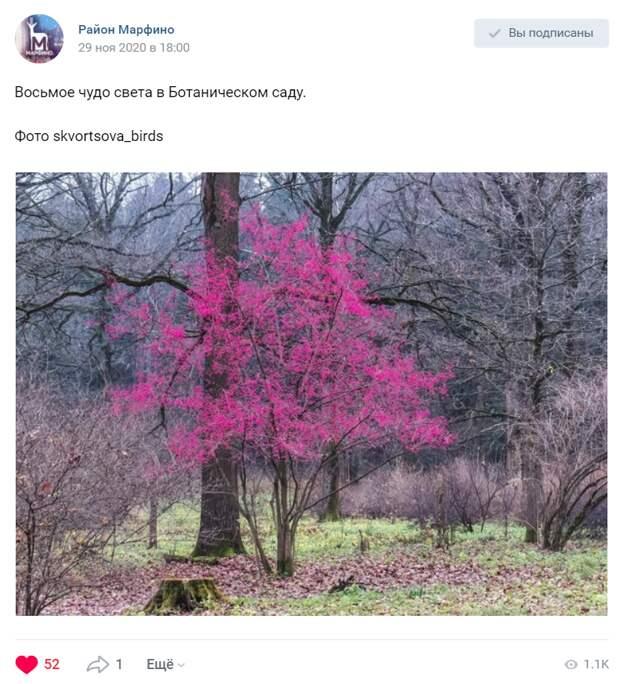 Цветное дерево из Ботанического сада впечатлило фотографа