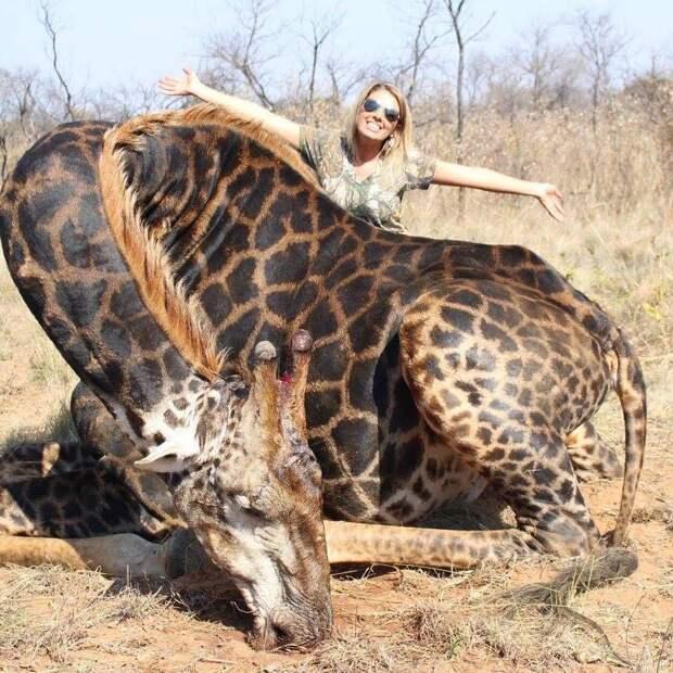 Кровожадная охотница убила редкого черного жирафа и сшила из его кожи кобуру