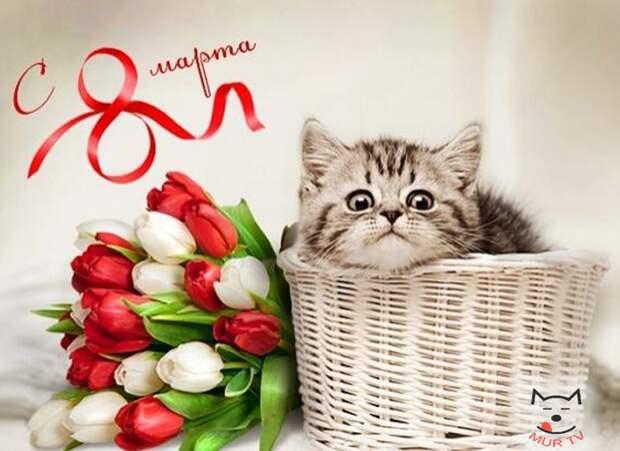 Да здравствует весна! Поздравляем милых дам с праздником 8 марта :)