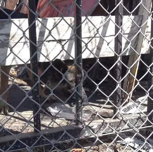 Собаку бросили без еды и воды на старой парковке, куда очень редко заходили люди