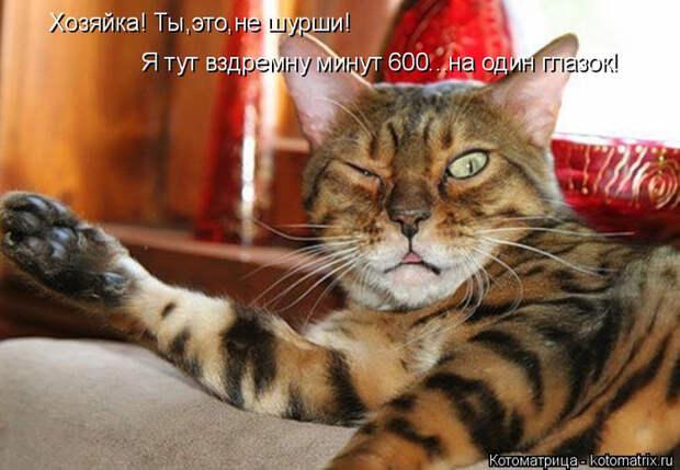 kotomatritsa_Zl (700x485, 342Kb)