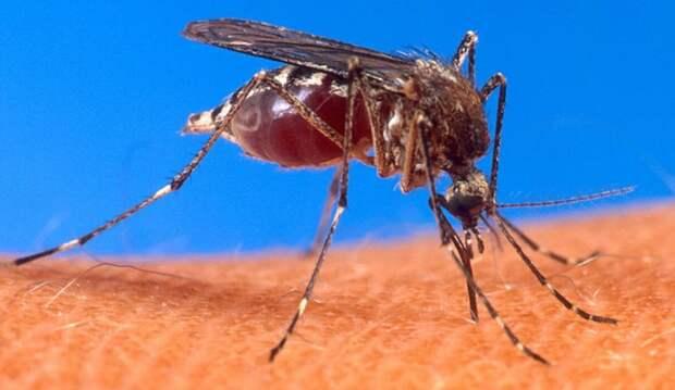 Иммунолог предупредила о возможном инфицировании после укусов комаров