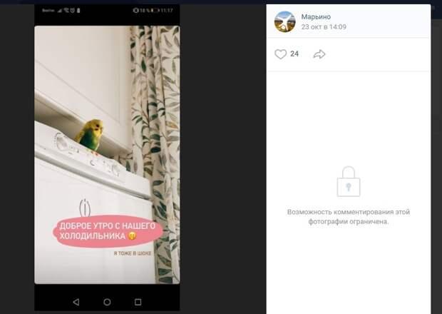 История попугая-«потеряшки» из Марьино закончилась счастливо