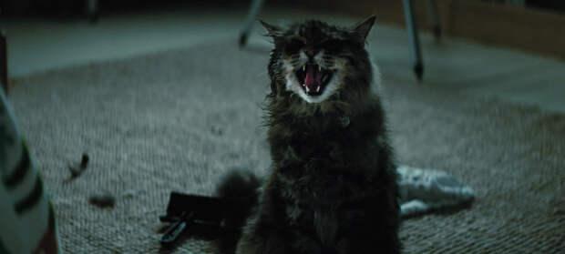 """Для очередной экранизации """"Кладбища домашних животных"""" нашли режиссера"""
