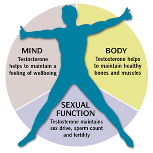 Причины мужского бесплодия: режим дефицита, лептин, инсулин