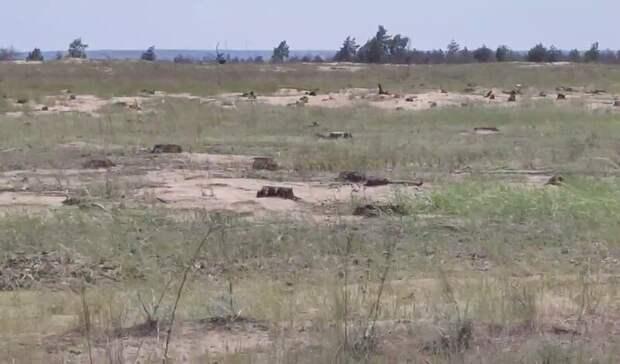 Наместе древонасаждения вНижне-Кундрюченском заказнике ростовчане увидели пни