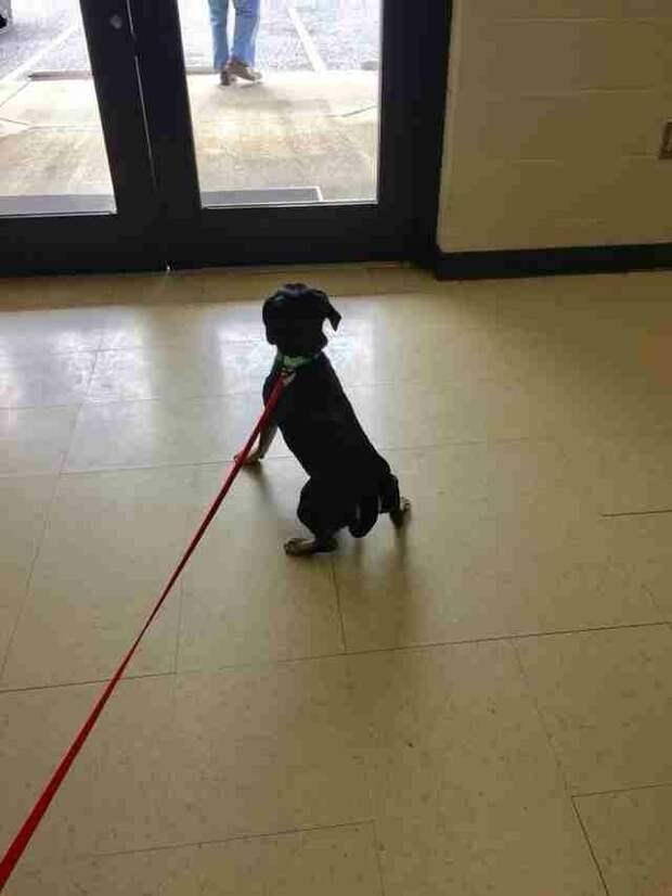 Хозяин Джаспера вышел из приюта, собака начала скулить и пыталась бежать за ним, но он даже не оглянулся в мире, животные, люди, преданность, приют, собака, спасение