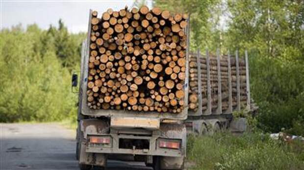Правительство вводит пошлины на экспорт отдельных видов грубо обработанной древесины