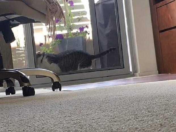 Ловким движением лап кот вышиб препятствие, не дающее ему войти в дом