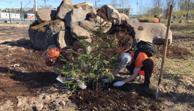 Петрозаводчане высадили деревья в Паровозном сквере