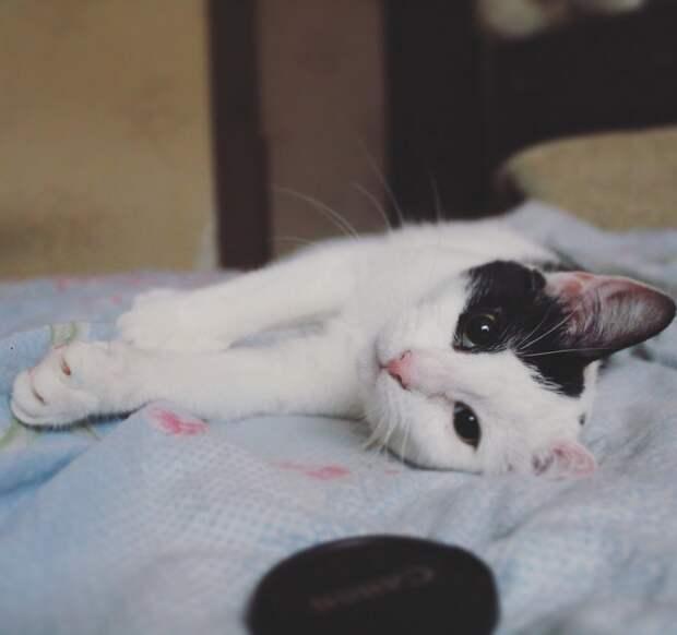 Котёнка выкинули прямо на проезжую часть… Грустная история со счастливым концом!