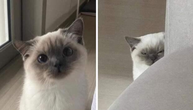 Смешные фото котиков, которые поднимут вам настроение
