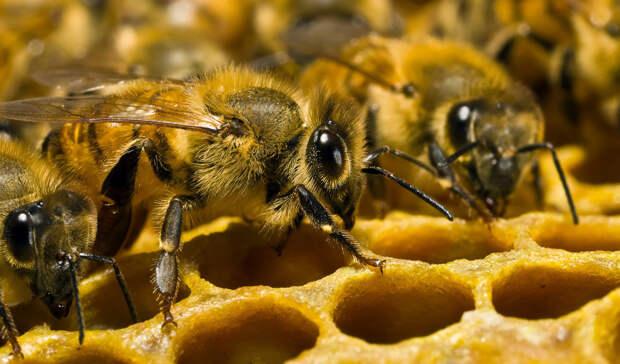 5 фактов о пчелах, которые изменят ваше представление о них