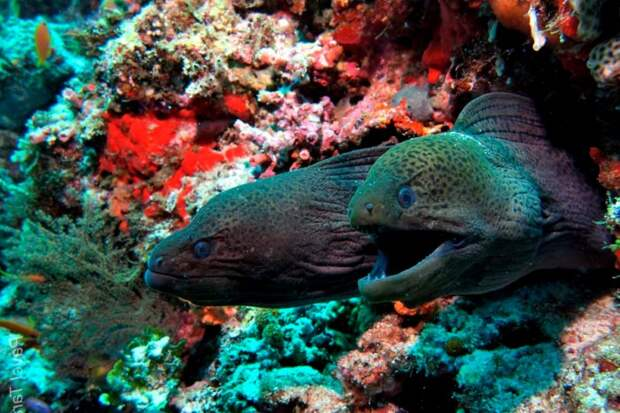 Почему не стоит купаться ночью в Красном море?