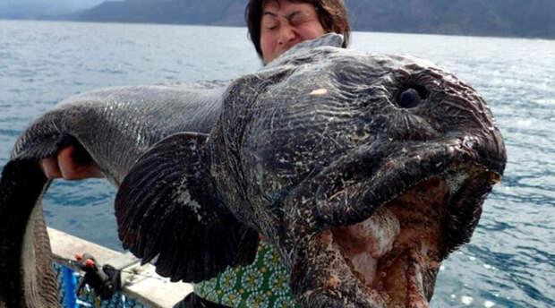 Страшный улов: дары моря, которые рыбаки боялись поднимать наверх