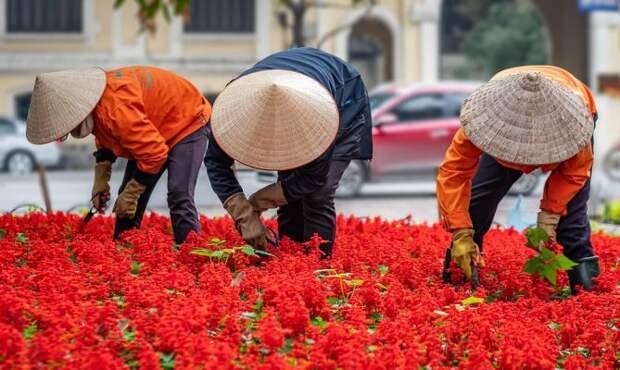 Вьетнамец сделал неожиданный вывод после попадания туриста из РФ в больницу
