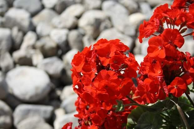 В сельском детском саду Удмуртии вырастили цветы для бабушек из дома ветеранов