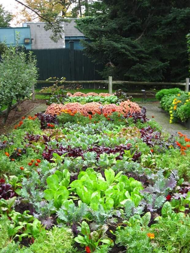 Красивая высадка растений