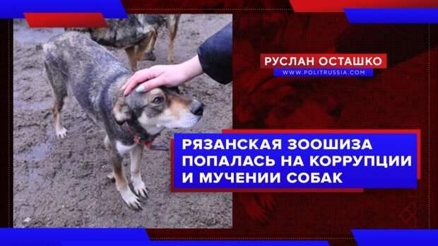 Рязанская зоошиза попалась на коррупции и мучении собак