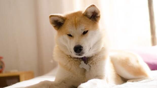 Ученые из США выяснили, как избавить собак от неприятного запаха изо рта