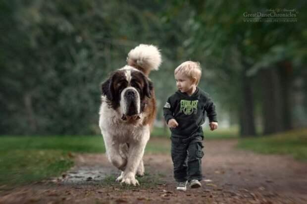 Я тоже мечтаю о собаке!