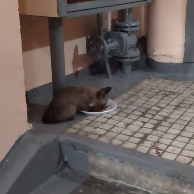 Брошенный котёнок прибился к подъезду на улице Рогова