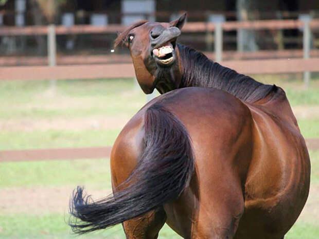 Фотогеничность — не их конёк…)) Животные, которые не умеют позировать!