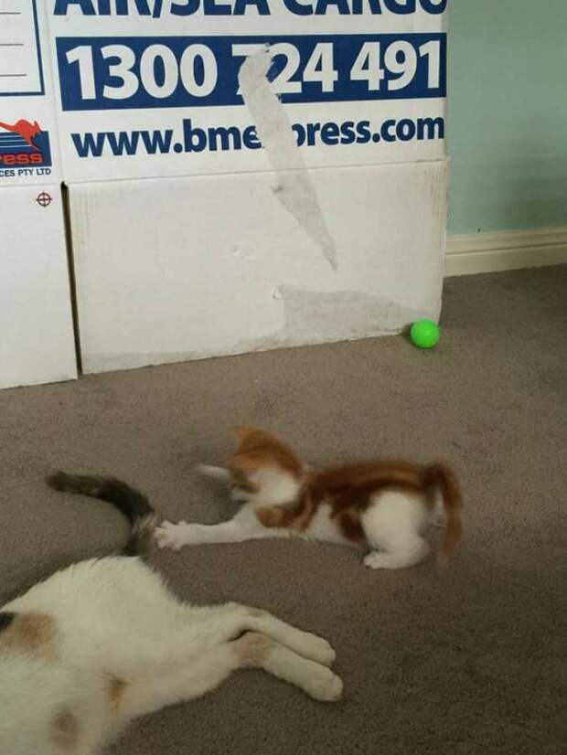 Бездомная кошка выкормила пятерых котят в месте, где почти не было еды