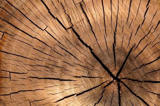 На 800-летия Москвы коммунальщики спилили сломанную ветку дерева