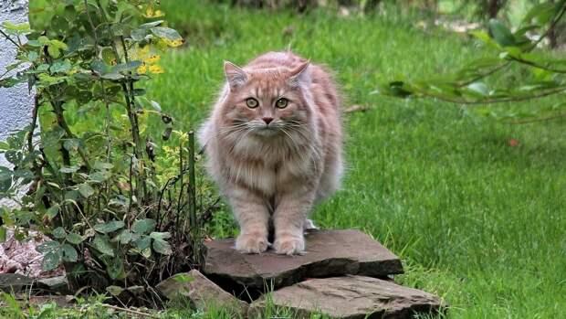 Кот застрял в окне и едва не погиб под Сахалином