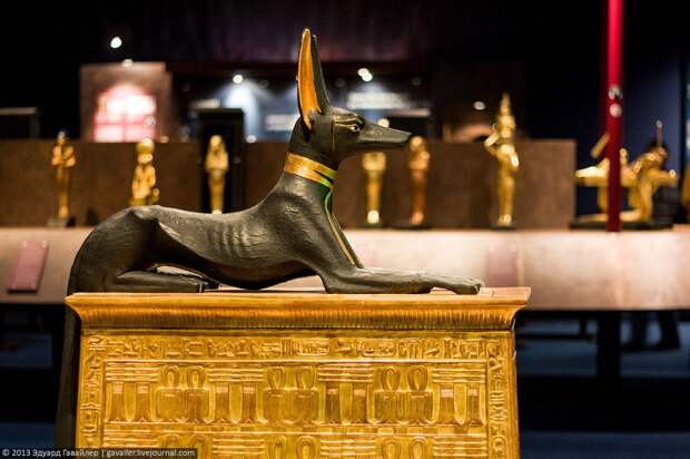 Статуя Анубиса из гробница Тутанхамона. Новое царство, XVIII династия. (с) Фото — Эдуард Гавайлер