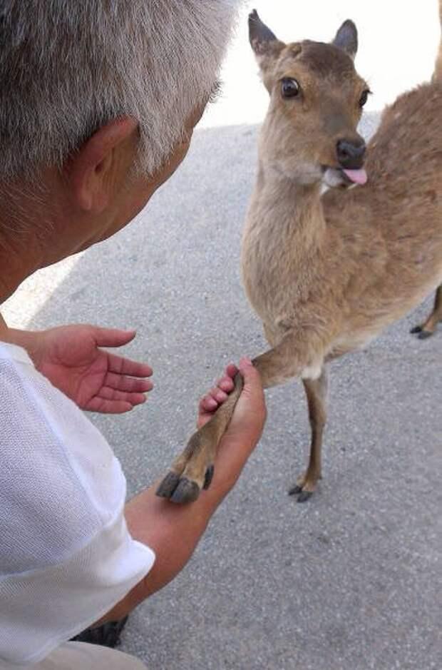 Животные тоже умеют показывать язык (29 фото)