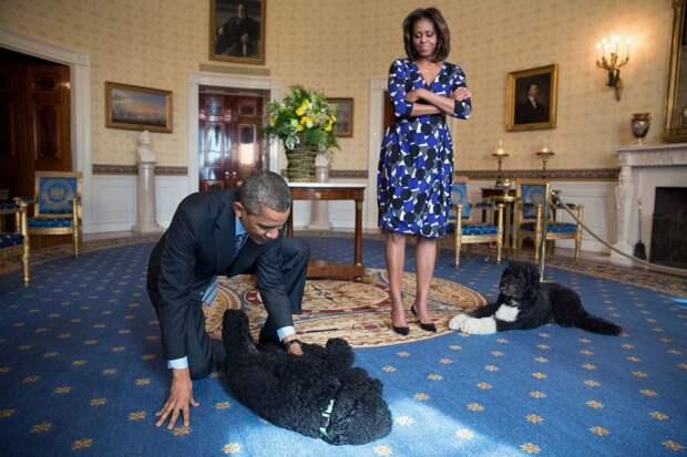 Собаки президентов США