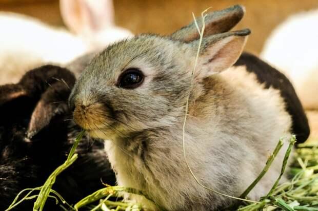 Домашние кролики гибнут в Серебряном Бору