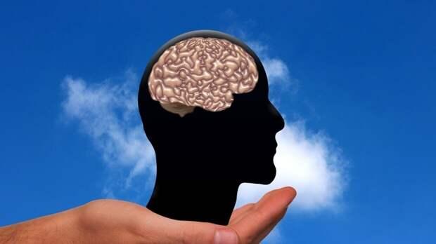 Ученые исследовали более тысячи зевков и научились вычислять по ним размер мозга
